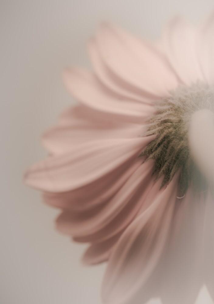 Dream On by Shari Mattox-Sherriff