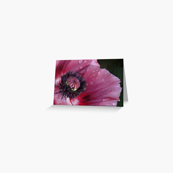 Three flowers: Red - The poppy weeps Greeting Card