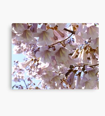 Paulownia Tree Canvas Print