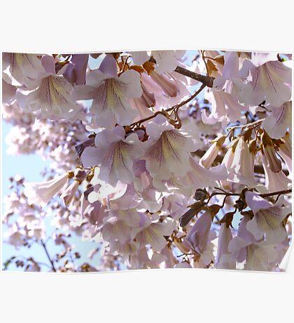 Paulownia Tree Poster