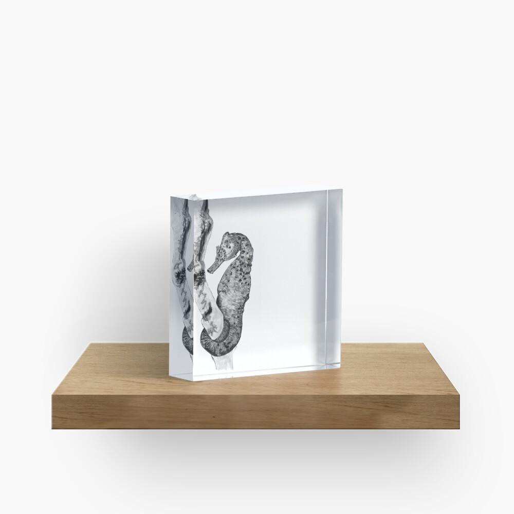 Sandra the Seahorse Acrylic Block