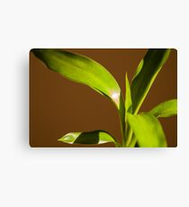 Freshness Canvas Print