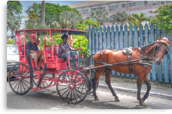 Horse Carriage Tour in Nassau, The Bahamas by Jeremy Lavender Photography