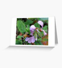 Sweet sip - African Hummingbird Hawk-moth Greeting Card