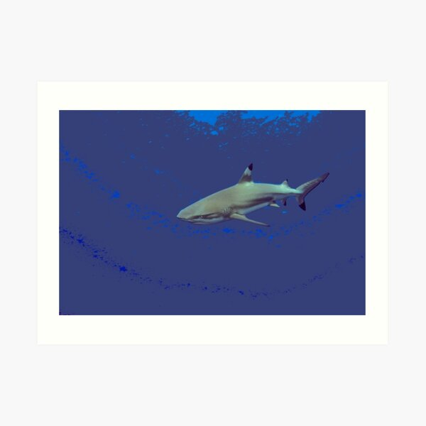 Cool Black tip reef shark Art Print