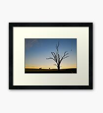 Sunset Soaring Framed Print