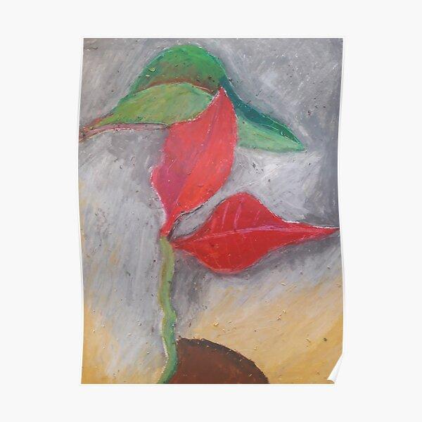 Poinsettia a flower Poster