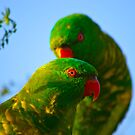 Scaley Breasted Lorikeets by JimMcleod
