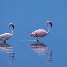 Lesser Flamingos.  Lake Bogoria, Kenya by Neville Jones