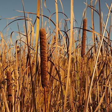 Cat Tails by ThomasMurphy