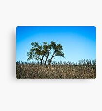 lone rural country tree Canvas Print