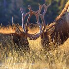 Elk 2 Elk by James Anderson