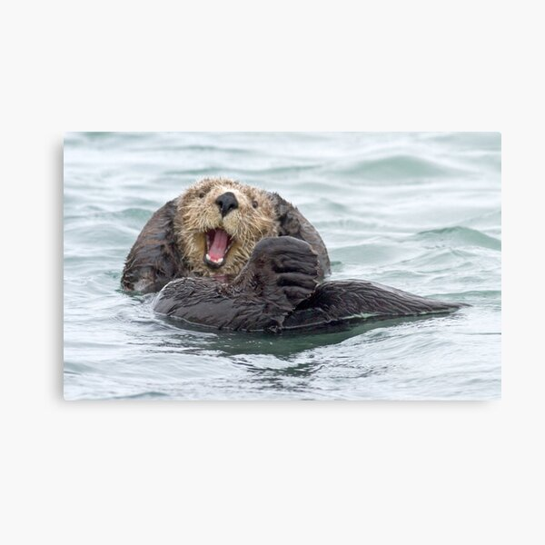 Happiness is a wet otter Metal Print