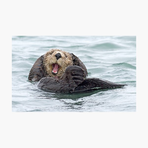 Happiness is a wet otter Photographic Print
