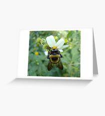 Bumblebee on Bidens alba (Spanish Needles) Greeting Card