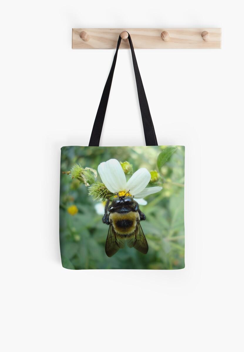 Bumblebee on Bidens alba (Spanish Needles) by May Lattanzio