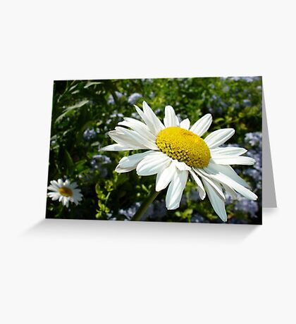 Close Up Common White Daisy With Garden  Greeting Card