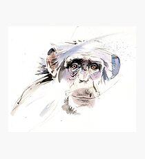 A sad chimp Photographic Print