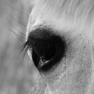 Jersey   Cow  Eye by Josie Jackson