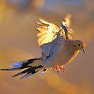 Birds of Flight Five by SB  Sullivan