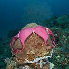 Underwater underwear by Stephen Colquitt