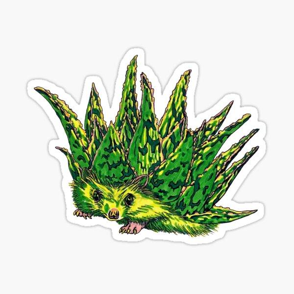Hedgehog Aloe  Sticker