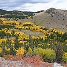 Colorado Autumn Aspen Colors by Bo Insogna