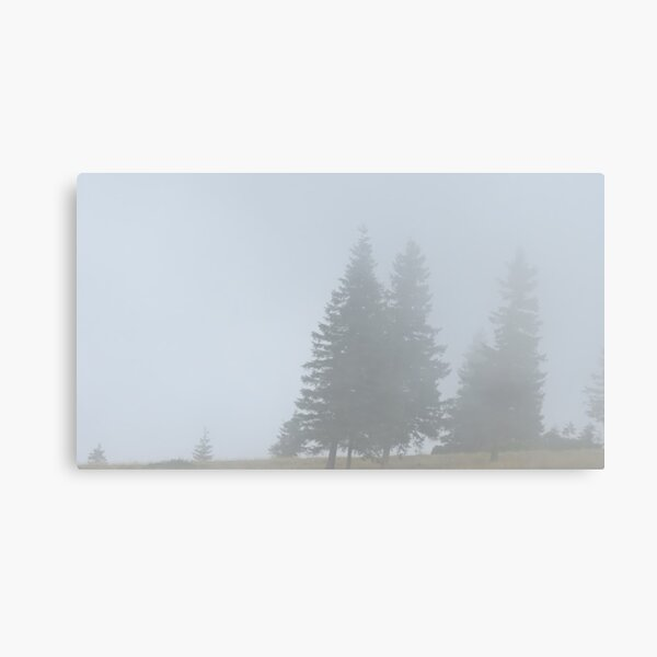 lonely trees in the morning mist Canvas Print