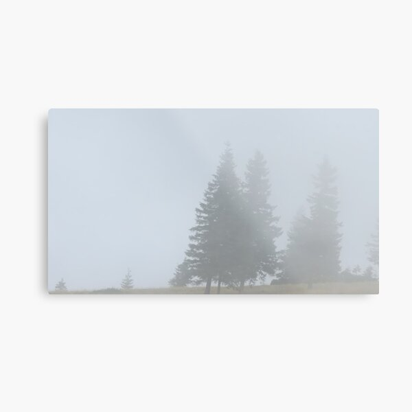 lonely trees in the morning mist Metal Print