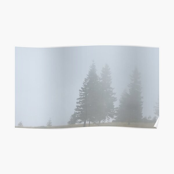 lonely trees in the morning mist Poster