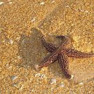 Starfish by Penny Rinker