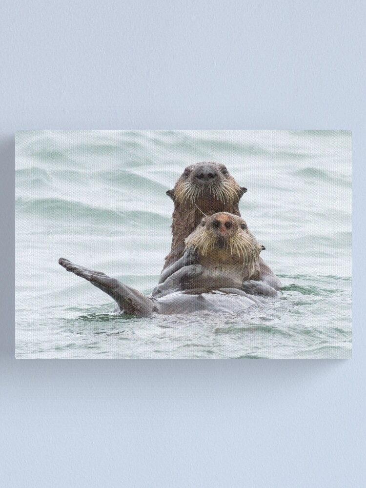 Alternate view of Two otters for the price of one Canvas Print