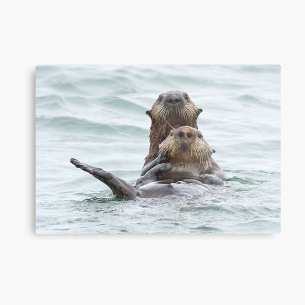 Two otters for the price of one Metal Print