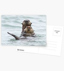 Two otters for the price of one Postcards