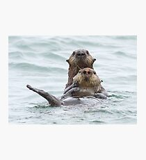 Two otters for the price of one Photographic Print