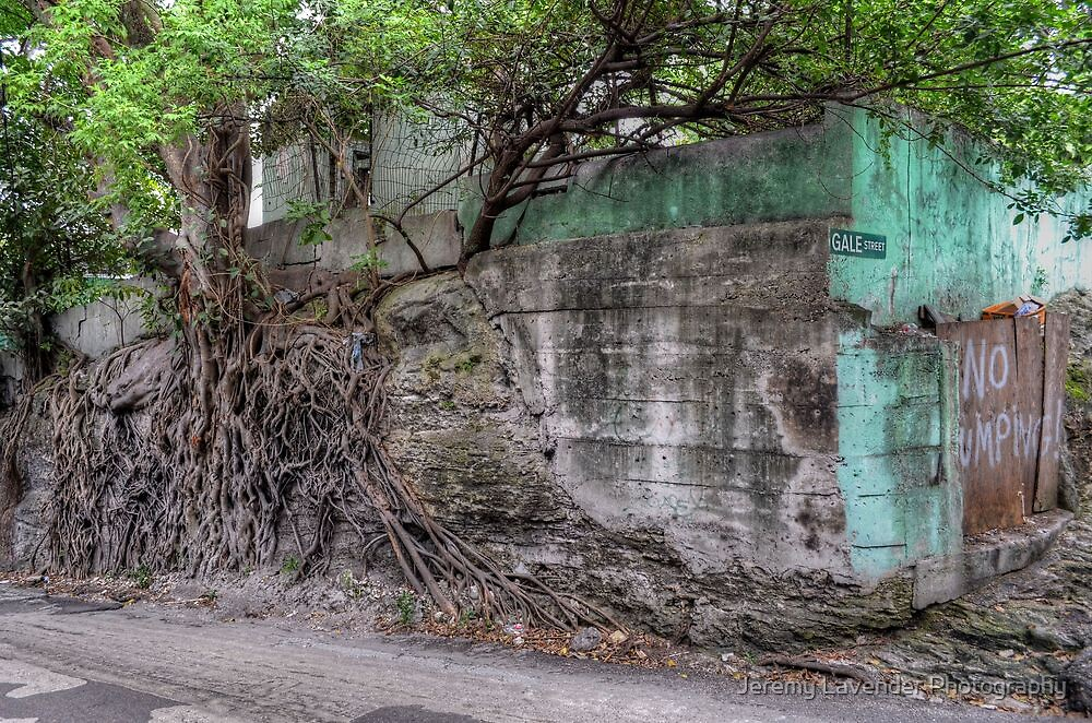 Nature taking over on Montrose Avenue in Nassau, The Bahamas by Jeremy Lavender Photography