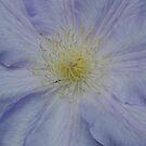 flowers by Penny Rinker