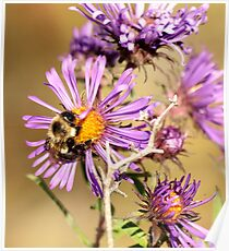Bumble Bee Bumble Bee Poster