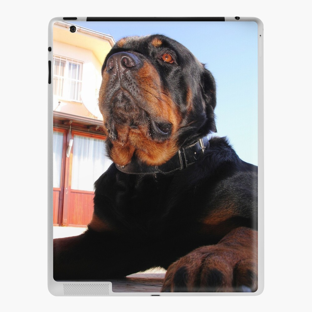 Photograph Portrait Of A Handsome Male Rottweiler Dog Ipad Case Skin By Taiche Redbubble