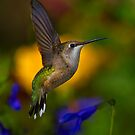 Ruby Throated Hummingbird Suspended In Flight by John Absher