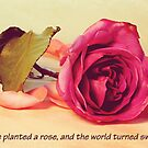 Love Planted a Rose by Amiteestoo
