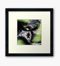 Mountain Gorilla, Volcanoes National Park, Rwanda, Africa. Framed Print