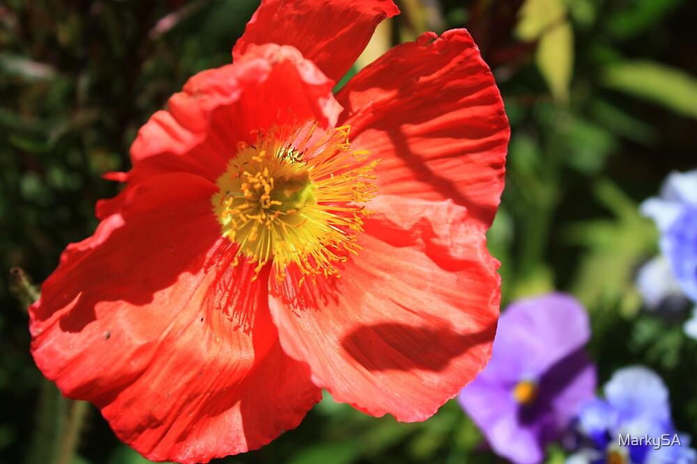 Precious Poppy by MarkySA