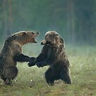 Fighting Brown Bears by Penny Dixie