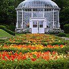 Woodstock Gardens  by Martina Fagan