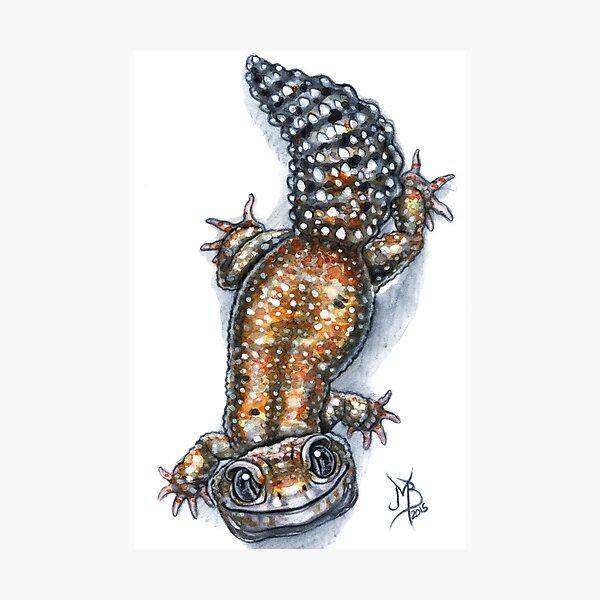 Gecko Friend Photographic Print