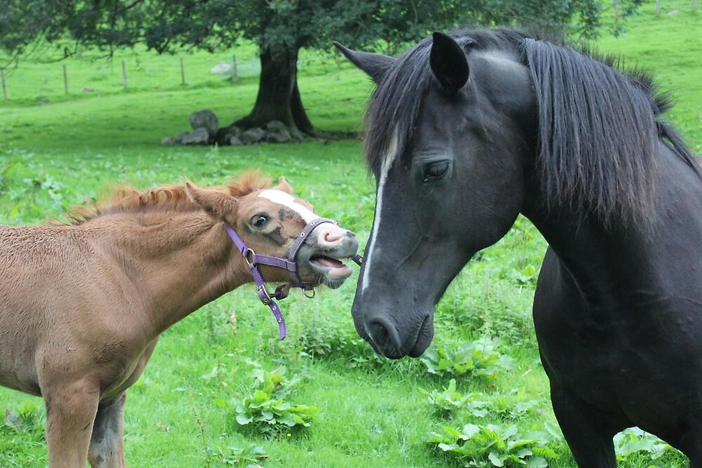MOOO im a horse by Abigail Jennings