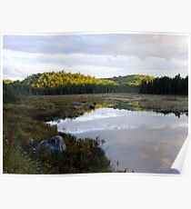The Road to Openogo Lake, Algonquin Provincial Park- 6pm  Poster