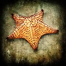 Starfish by Carlos Restrepo