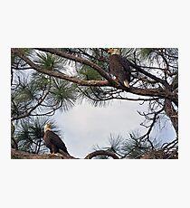 Mr & Mrs Eagle  Photographic Print